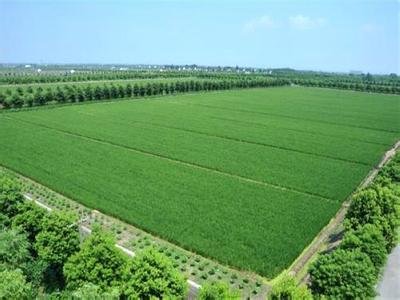 2017年中央一号文件:推进农业供给侧结构性改革