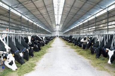 乳业应向现代化生产要竞争力