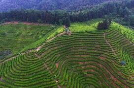 农业部:减少全国果菜茶产区化肥用量  推进有机肥替代化肥