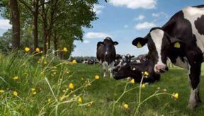国际奶价一路看涨  国内牛奶销售转好
