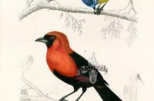 最全鸟类手绘稿,经典收藏!