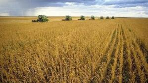 美国农业部:美国向大豆种植者支付47亿美元援助