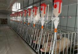 """京东宣布入局""""智能养猪"""" 预计每年可降低行业成本500亿元"""
