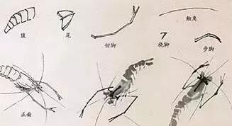 国画中最难表现的虫鸟画法,这里都齐了!