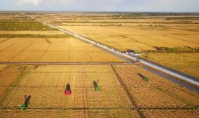 黑龙江省发布水稻智能浸种催芽补贴政策