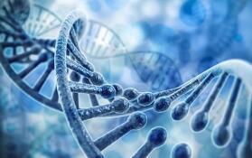 """我国科学家开发出基因编辑""""安全剪刀"""" 瞄准攻克罕见病"""
