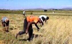 我国杂交水稻在非洲创高产纪录