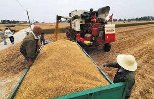 自7月2日起,河南省部分地区启动小麦托市收购