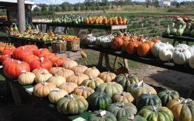 财金〔2019〕55号关于开展中央财政对地方优势特色农产品保险奖补试点的通知