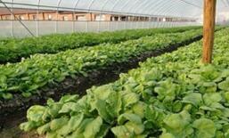 农业农村部:6月份鸭梨价格同比上涨165.5% 苹果价格上涨106.2%