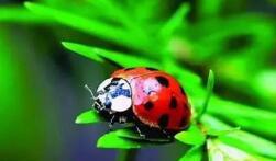 生物防治有望替代农药