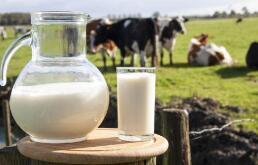 进口大包粉价格接近生鲜乳售价 国内上游乳企迎利好