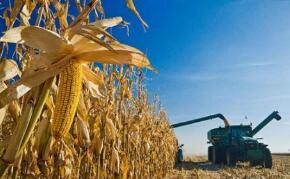 美国农产品期货10月15日普跌  CBOT 12月玉米期货下跌4-3/4美分