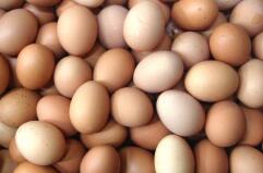 四季度鸡蛋价格易涨难跌