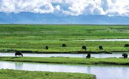 中国科学院-国家林业和草原局湿地研究中心揭牌