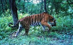 东北虎豹国家公园管理局野生动物救护中心成立
