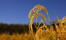农业农村部办公厅关于印发2020年农业转基因生物监管工作方案的通知
