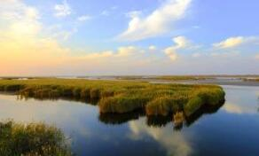 水利部:黄河三角洲应急生态补水已引水超8000万立方米
