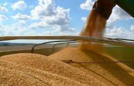 芝加哥期货交易所玉米、小麦和大豆期价18日涨跌不一