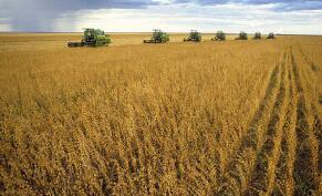 农办农[2020]3号农业农村部办公厅关于肥料包装废弃物回收处理的指导意见