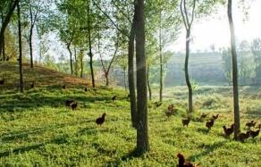 林资规〔2020〕1号国家林业和草原局关于统筹推进新冠肺炎疫情防控和经济社会发展做好建设项目使用林地工作的通知