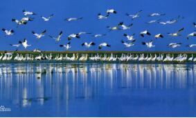 林护发〔2020〕13号国家林业和草原局关于切实加强鸟类保护的通知
