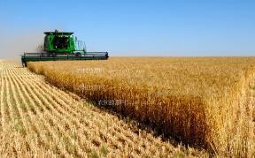 芝加哥期货交易所玉米、小麦和大豆期价20日涨跌不一