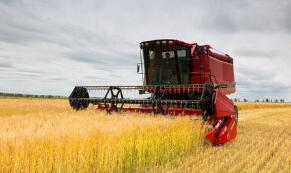 芝加哥期货交易所玉米、小麦和大豆期价31日涨跌不一