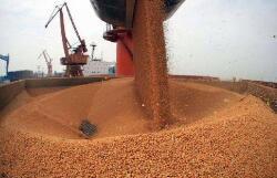 口粮绝对安全有保障 小麦和稻谷库存够全国消费一年
