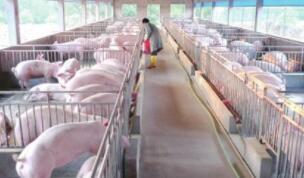 内蒙古投入近20亿元扶持生猪产业发展