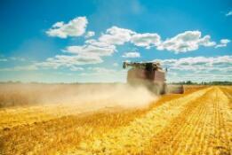 芝加哥期货交易所玉米、小麦和大豆期价26日涨跌不一
