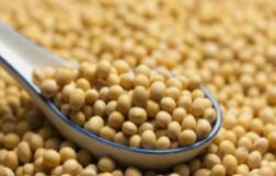 国内商品期货多数收涨,沥青涨逾3%,沪银、豆粕、菜粕涨逾2%