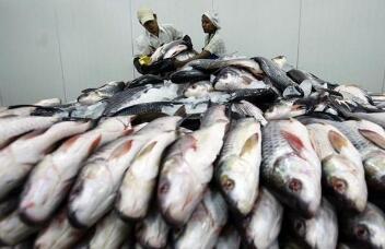 缅甸本财年水产品出口猛增至7亿多美元