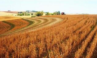 巴西下调2019—2020年度玉米产量预期