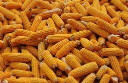国家统计局关于2020年夏粮产量数据的公告