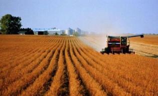 俄罗斯农业部长谈种植业发展战略方向