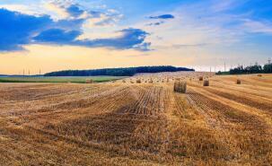 罗马尼亚前四个月谷物出口增长近40%