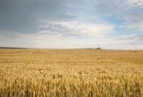 巴西预计今年进口小麦730万吨