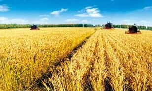 科技部 农业农村部 教育部 财政部 人力资源社会保障部 银保监会 中华全国供销合作总社印发《关于加强农业科技社会化服务体系建设的若干意见》的通知国科发农〔2020〕192号