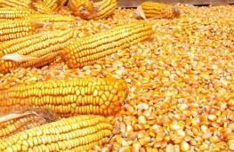 大商所关于调整玉米和玉米淀粉品种期货合约涨跌停板幅度和交易保证金水平的通知 大商所发〔2020〕307号