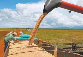巴西2020年小麦产量预计创历史记录