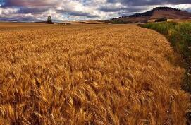 芝加哥期货交易所玉米、小麦和大豆期价5日涨跌不一