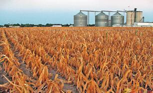 韩长赋在黑龙江调研时强调  毫不松懈抓好秋粮生产  全力夺取全年粮食和农业丰收