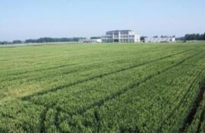 南康:稻虾产业助推农业生态经济发展