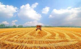 芝加哥期货交易所玉米、小麦和大豆期价17日全线上涨