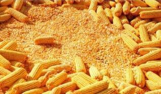 芝加哥期货交易所玉米、小麦和大豆期价19日涨跌不一