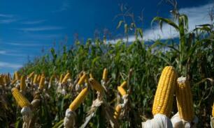 """9月7日,""""农产品批发价格200指数""""比上周五上涨0.18个点"""