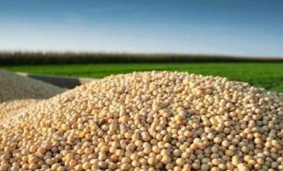 """9月24日:""""农产品批发价格200指数""""比昨天上涨0.22个点"""
