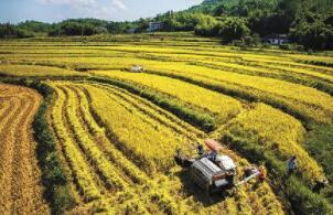 """9月30日:""""农产品批发价格200指数""""比昨天下降0.03个点"""