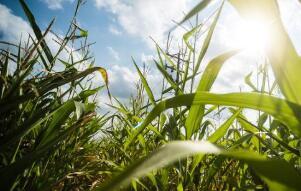 """10月9日:""""农产品批发价格200指数""""比节前下降0.22个点"""